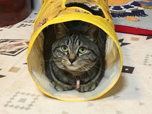 避難するネコ